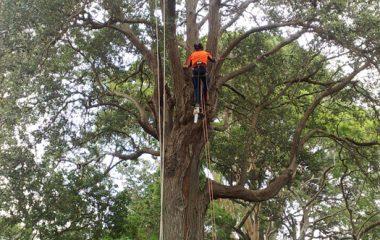 Tree Experts North Shore Sydney