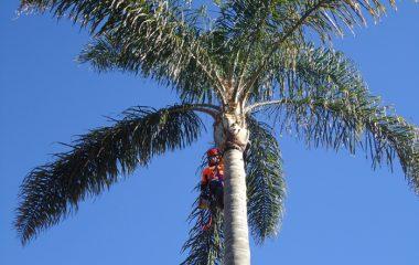Tree Trimming North Shore Sydney