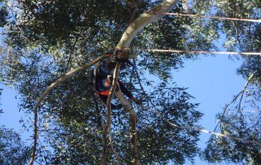 Tree Removal North Shore Sydney