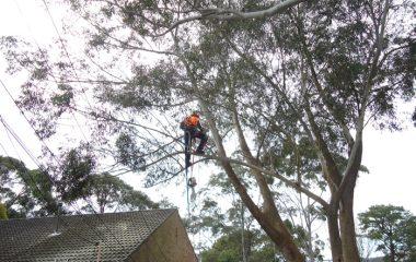 Emergency Services North Shore Sydney