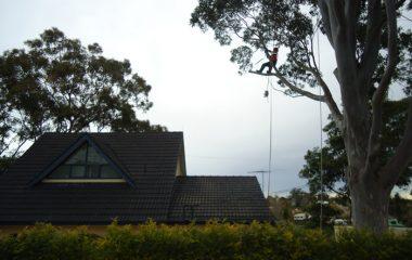 Tree Emergency Services North Shore Sydney