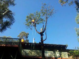 North Sydney Tree Removal