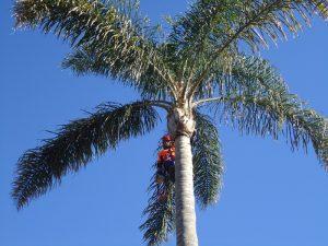 Arborists Report Sydney