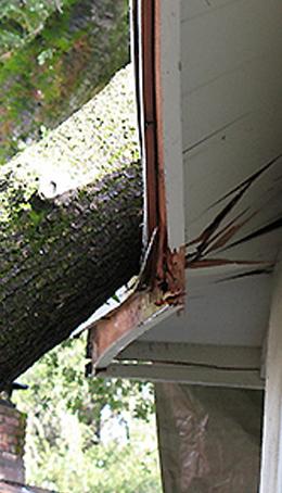 emergency tree removal sydney