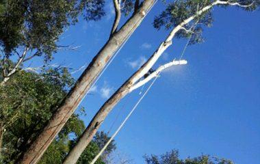 Sydney Tree Removal Service