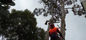 Tree Surgeon Sydney