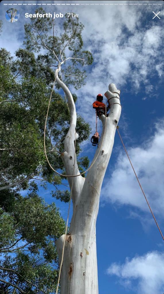 North Sydney Tree Lopping