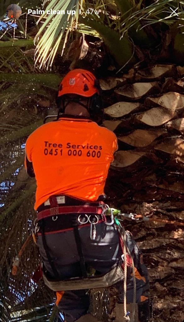 Tree pruning services sydney